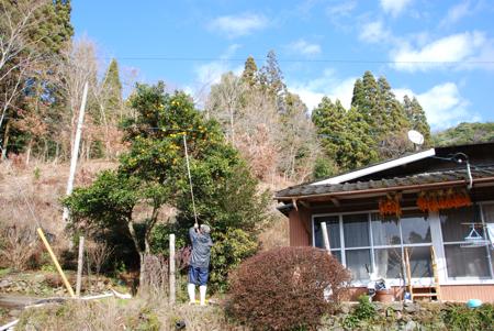 yuzu_07.jpg