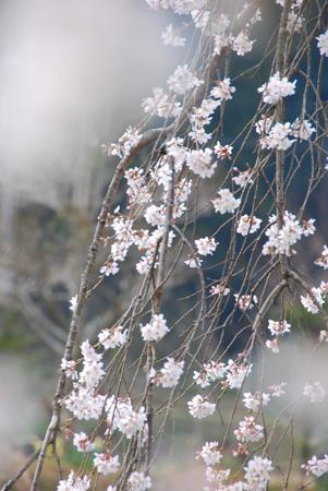 sakurai_a4.jpg