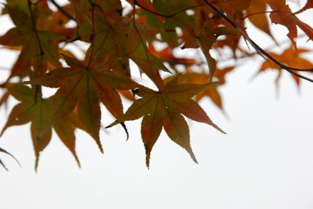 kouyou_05.jpg