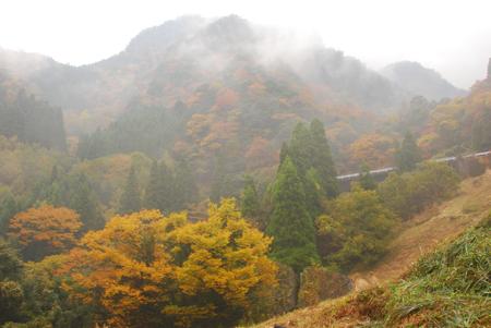 kouyou_42.jpg