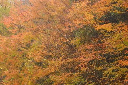 kouyou_53.jpg