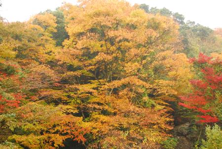 kouyou_54.jpg