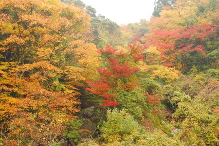 kouyou_55.jpg